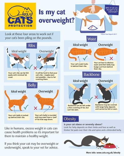 Guide to recognising the signs of obesity in cats