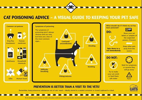 Guide to recognising the signs of cat poisoning