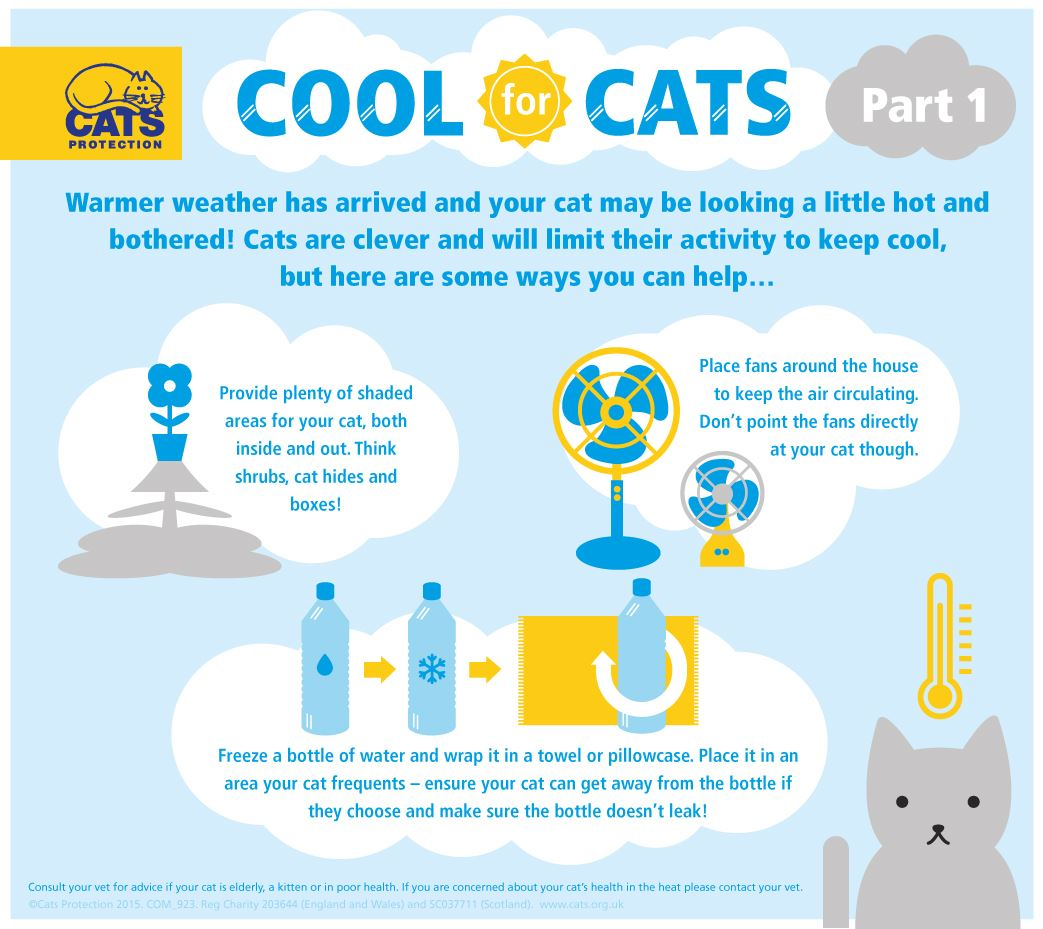 keeping your cat cool in summer part 1