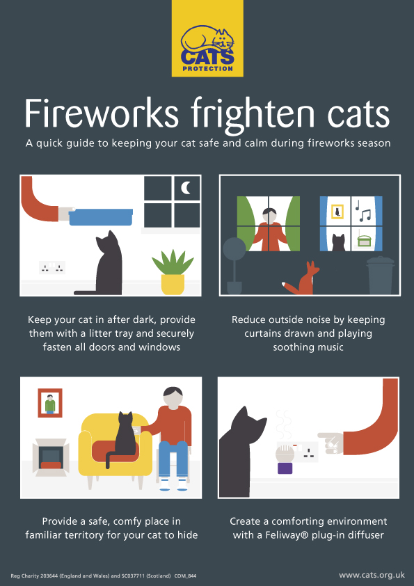 How to keep cat calm during fireworks