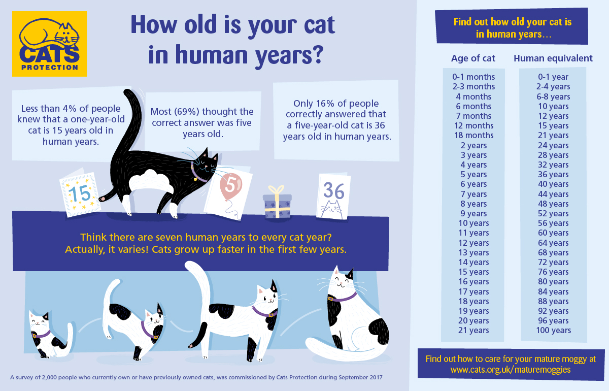 age of cats graphic
