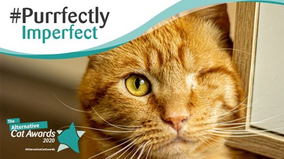 one eyed ginger cat with #purrfectly imperfect logo and Alternative Cat Awards 2020 logo