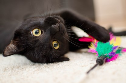 black cat lying down with multi-coloured feather toy