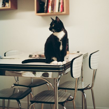 black and white cat sitting on table