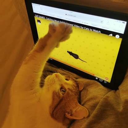cat pawing at mouse on tablet screen