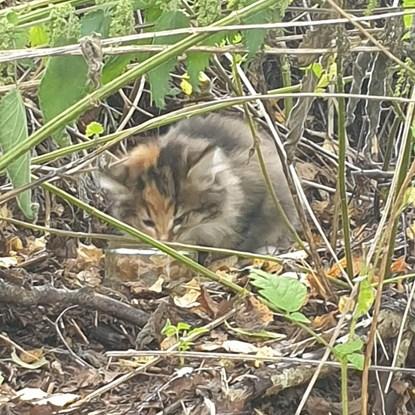 tabby kitten in long grass