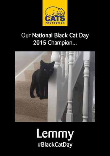 poster showing black cat standing on stairs