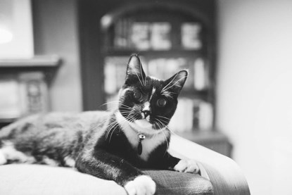 black-and-white photo of black-and-white cat
