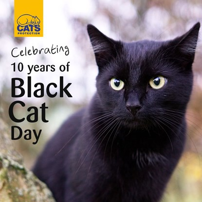 Celebrating 10 years of Black Cat Day text next to black cat outdoors