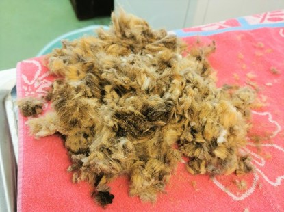 a pile of matted brown cat fur on a red towel