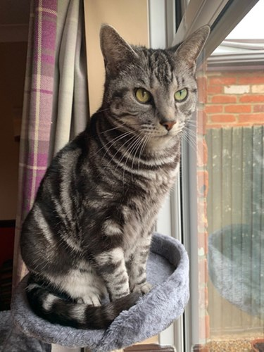 grey tabby cat sitting on cat tower next to window