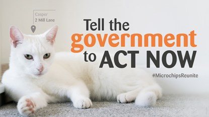 White cat lying on the floor with text 'Tell the government to act now'