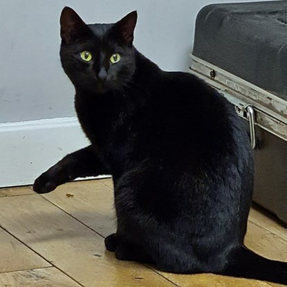 Black cat sitting on the floor with one paw in the air