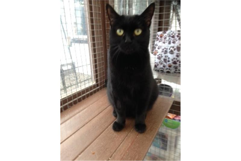Mindy - Black Cat