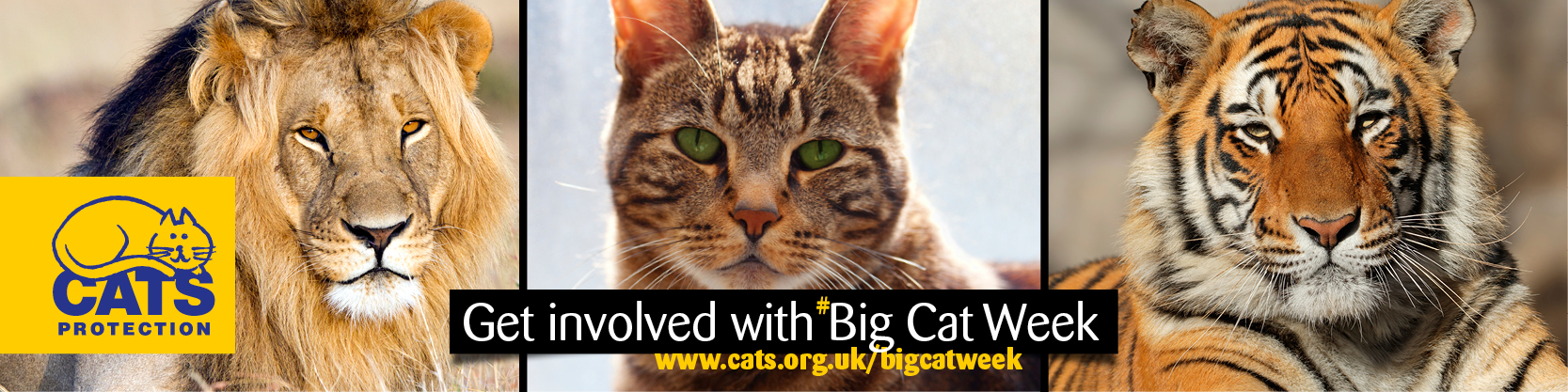 cats protection big cat week 2016