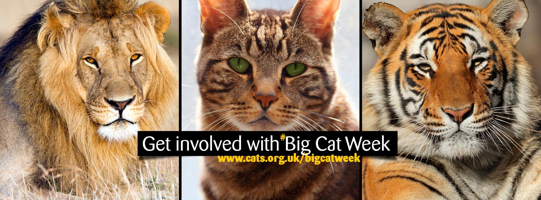 Big Cat Week banner