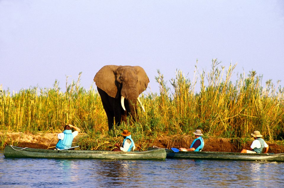 Canoeing and elephant