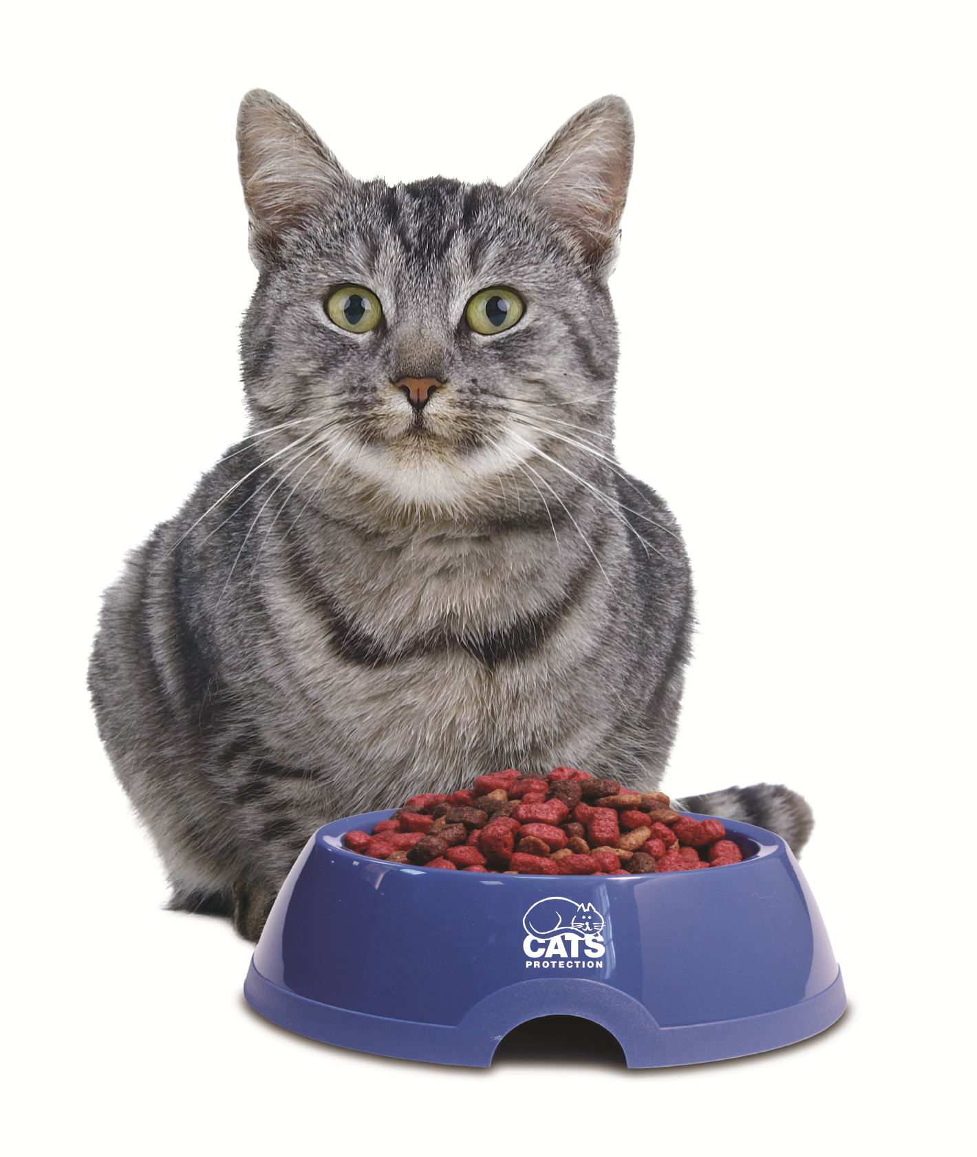 grey cat sitting in front of a blue food bowl full of cat biscuits