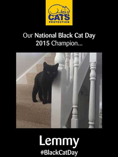 Lemmy winner black cat day competition