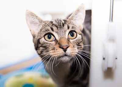 stray cat cats protection
