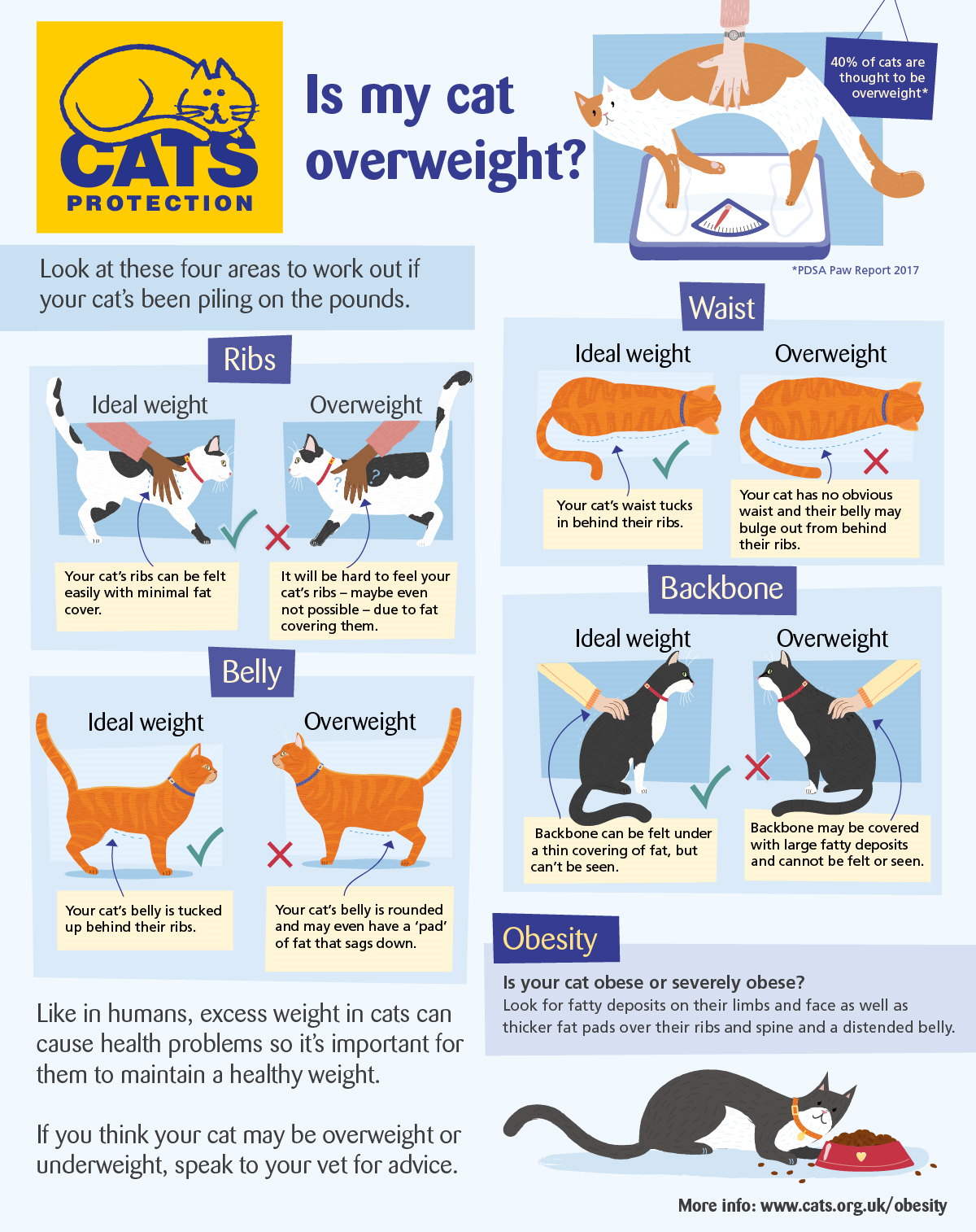 overweight cats