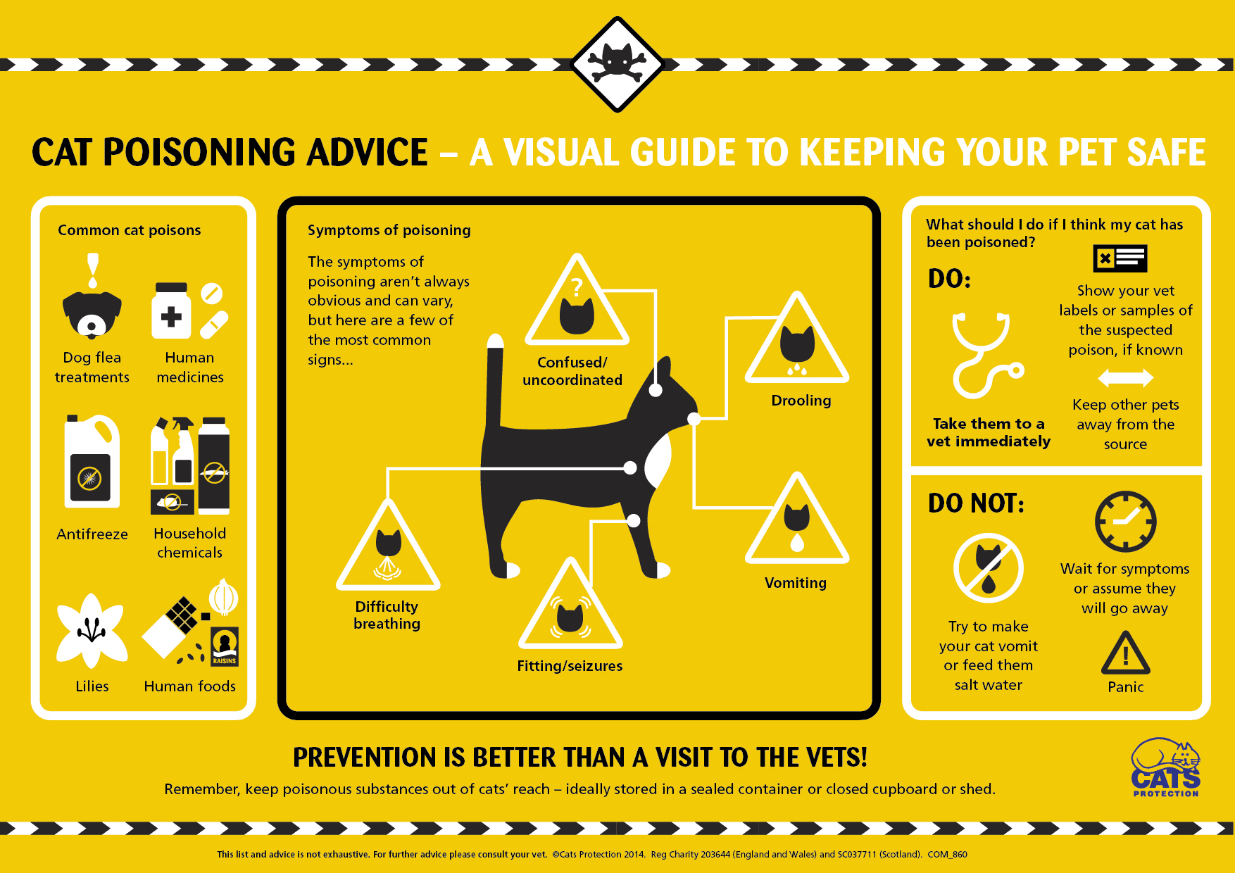 poisoning in cats visual guide