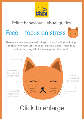 Cat stress infographic