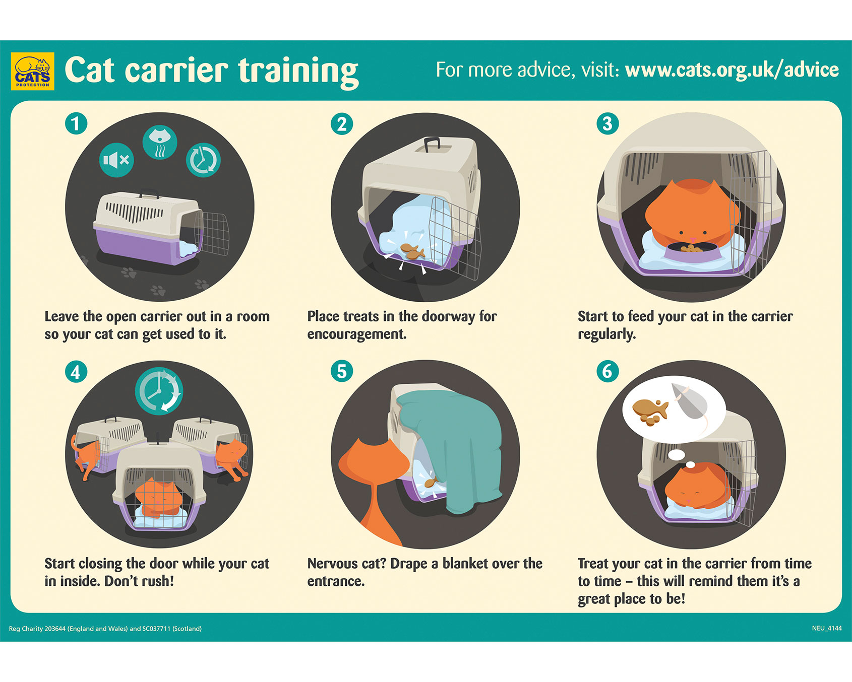 Cat Carrier Training visual guide