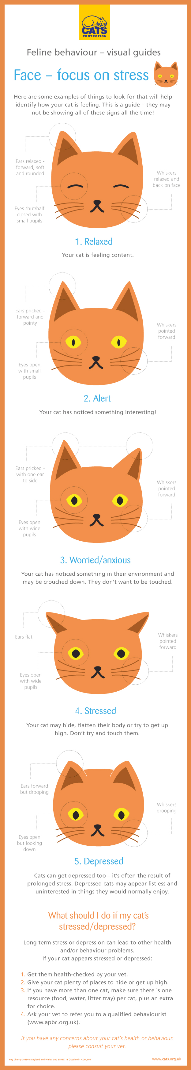 cat behaviour faces