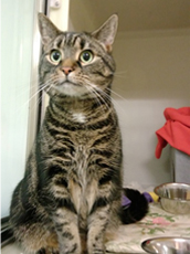Elsa waiting to find her new home at our Mitcham Homing Centre