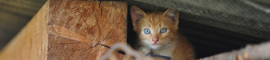 Ginger kitten in a workshop
