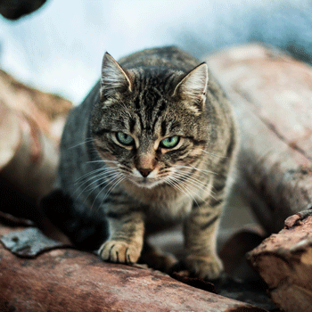 sans as a cat