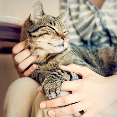 cats protection northern ireland manifesto