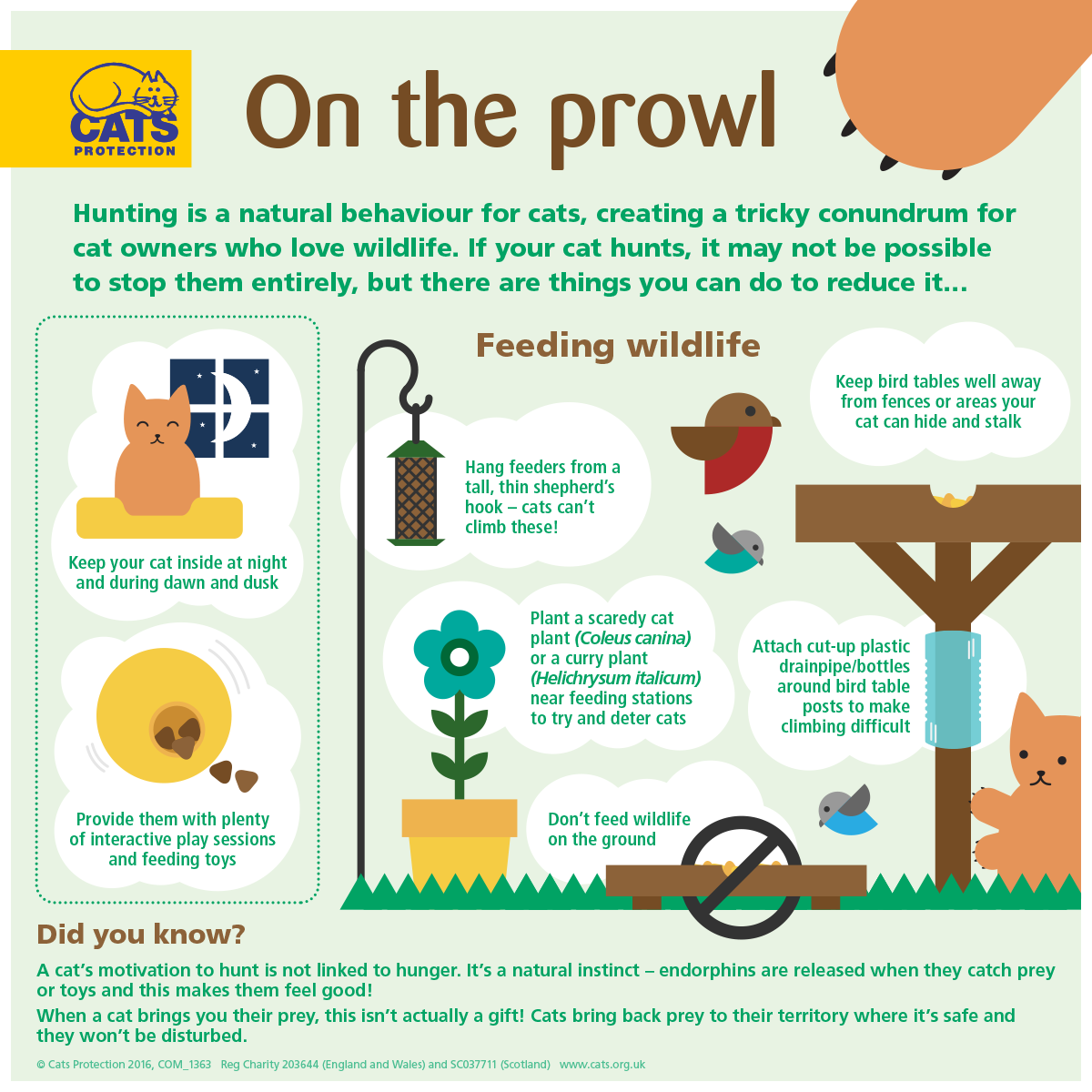 on the prowl how to deter your cat from hunting guide