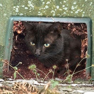 Raz living in a compost bin