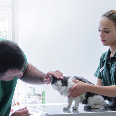 Vets with black and white cat