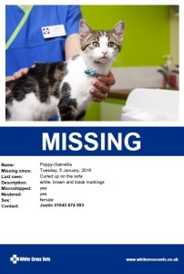 What To Do If Your Cat Is Missing