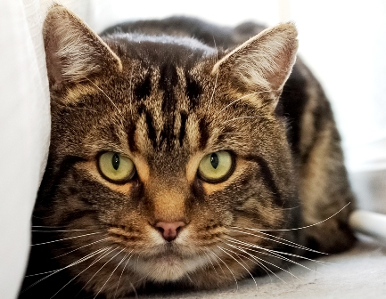 East Surrey Cats Protection Facebook