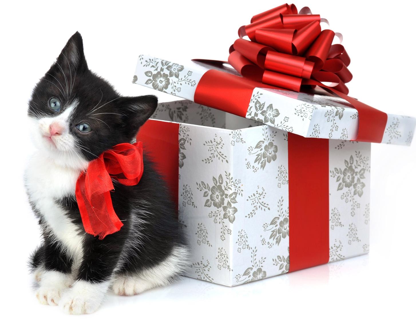 Gift Donation