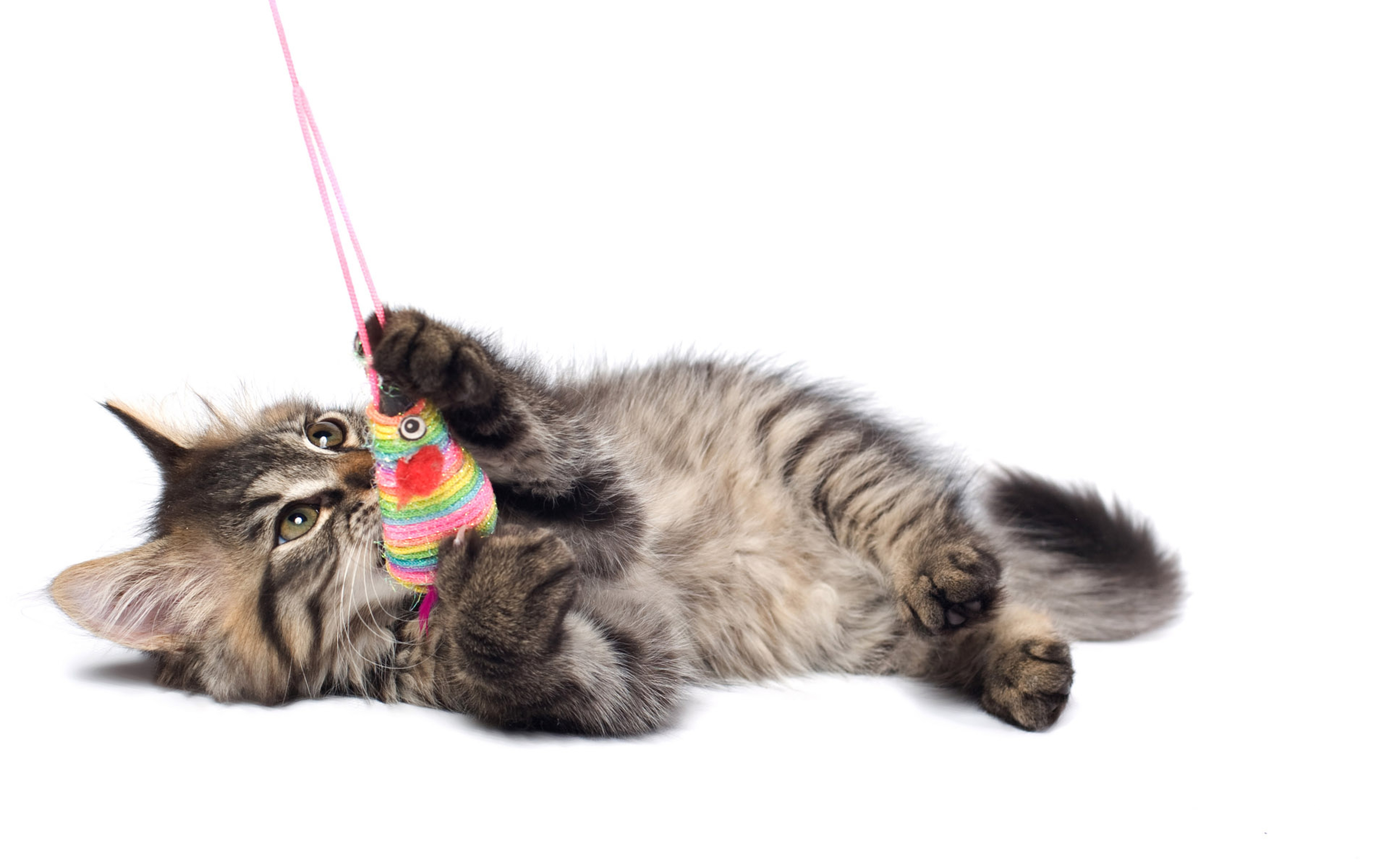 Cat toy competition for Kitten toys you can make