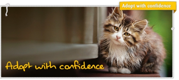 Adopt with Confidence at Cats Protection Frome