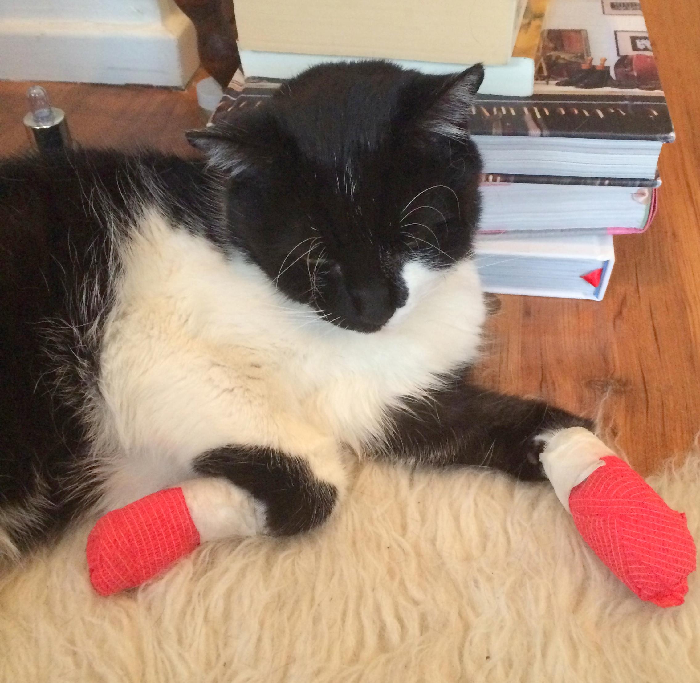 Hercules in Socks!