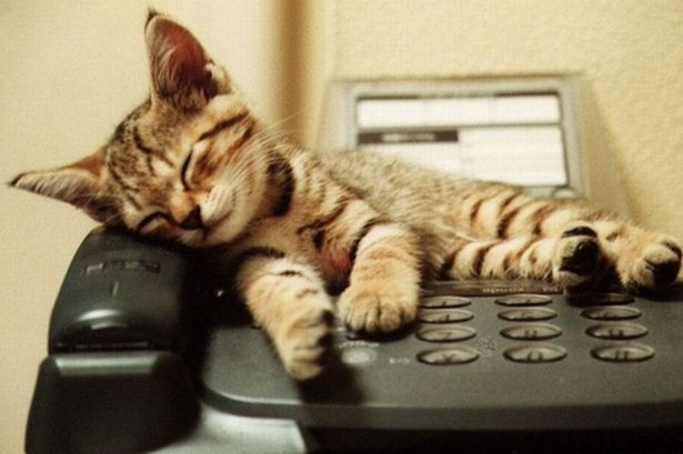 cat on the phone
