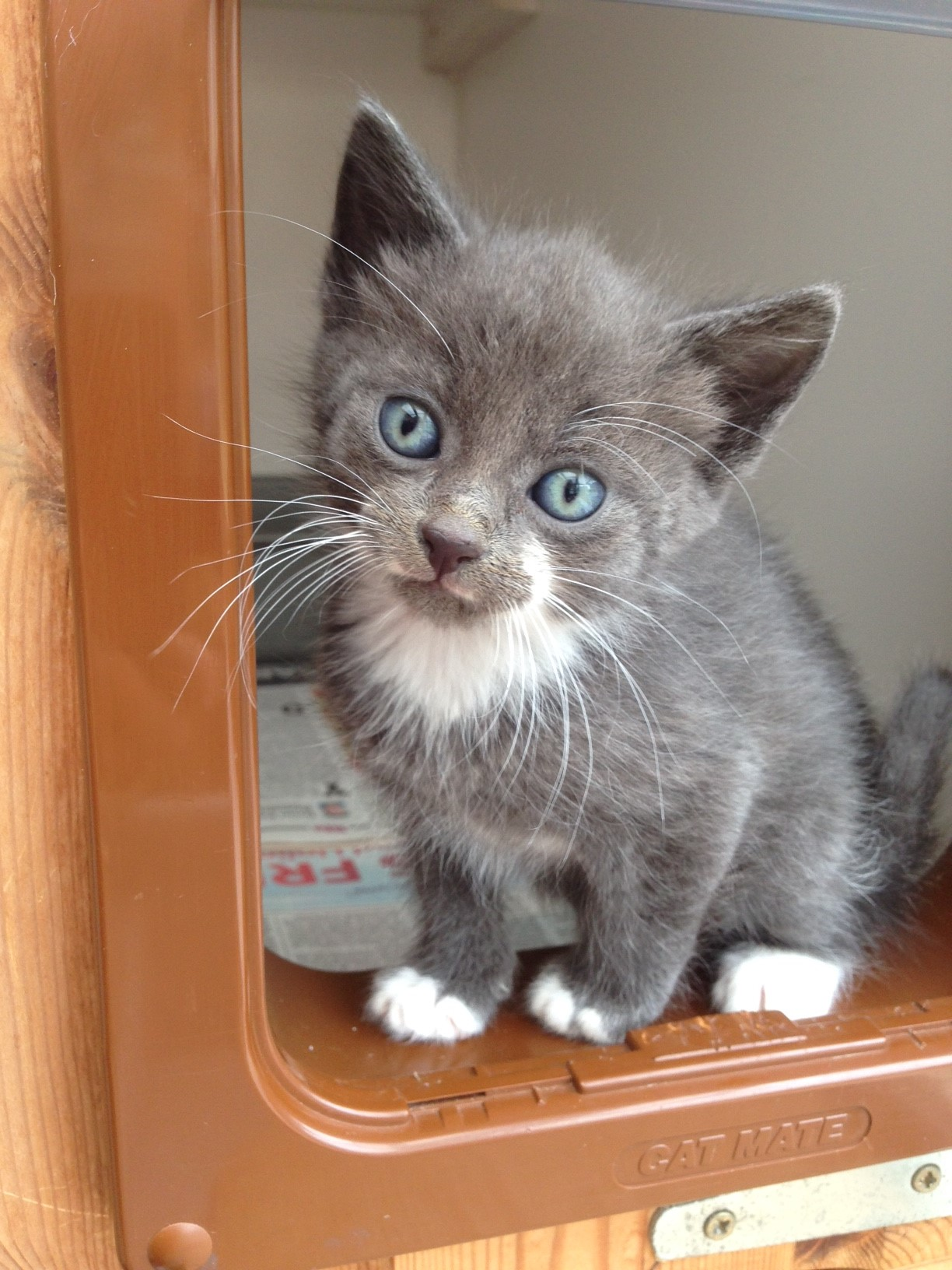 Kitten born at Macclesfield CP and rehomed in 2015