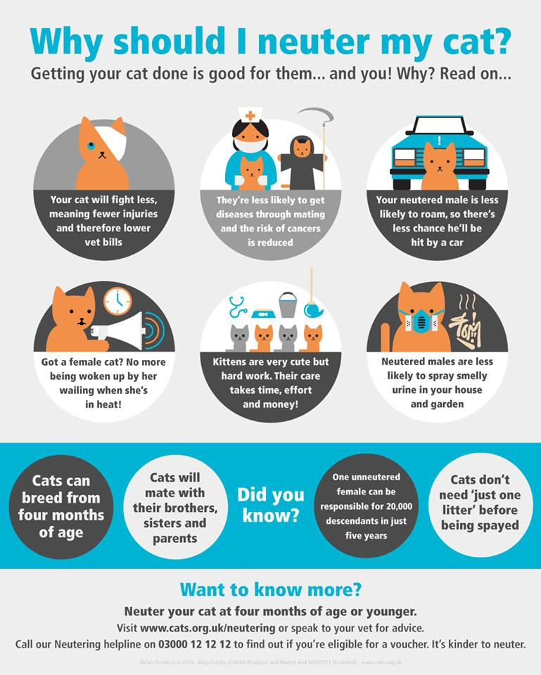 Cats Protection Benefits