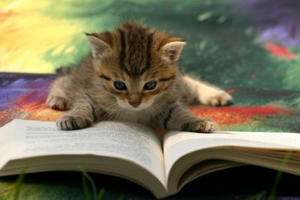 Cat reading a booik