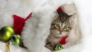 Cats Protection Christmas Bazaar