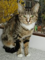 Chloe has gone to her new home