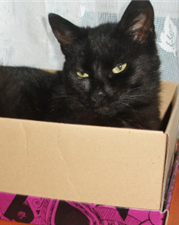 Lilly,  a black cat