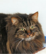 Could you rehome Monty?